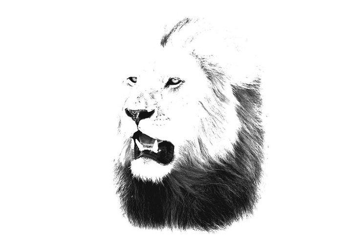 Lion Greeting Card featuring the photograph Lion Portrait - Lions Of The Masai Mara by Aidan Moran