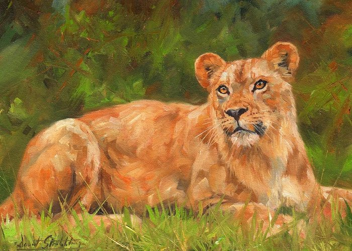 Lioness Greeting Card featuring the painting Lioness by David Stribbling
