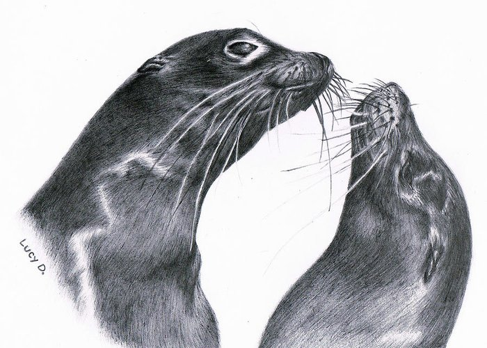 Sea Lion Greeting Card featuring the drawing Lions by Lucy D