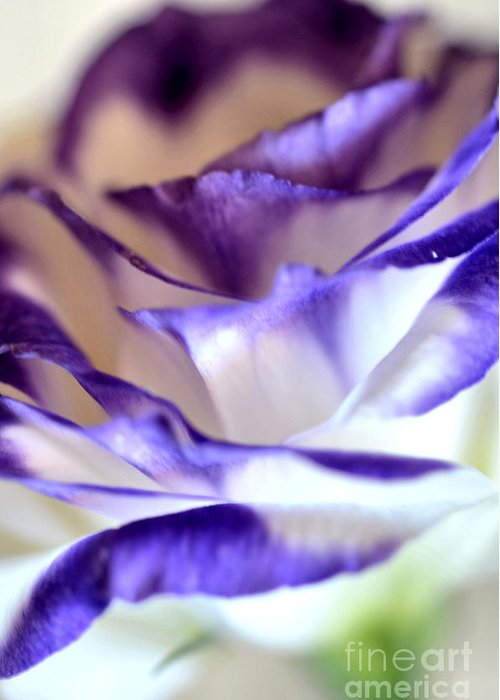 White Blue Violet Lisianthus Greeting Card featuring the photograph Lisianthus by Deb Halloran