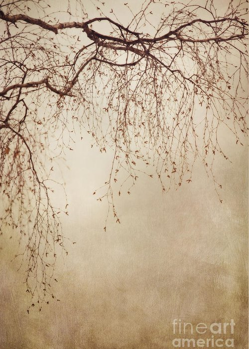 Vertical Greeting Card featuring the photograph Listen Closely by Priska Wettstein