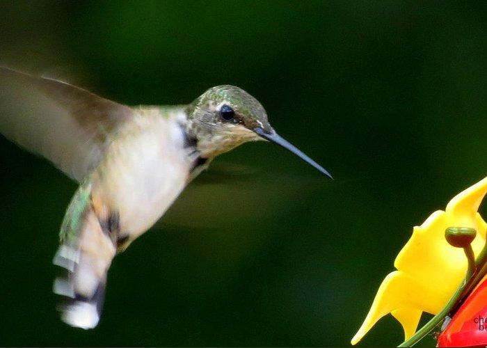 Hummingbird Greeting Card featuring the photograph Little Bird by Cheri Beck