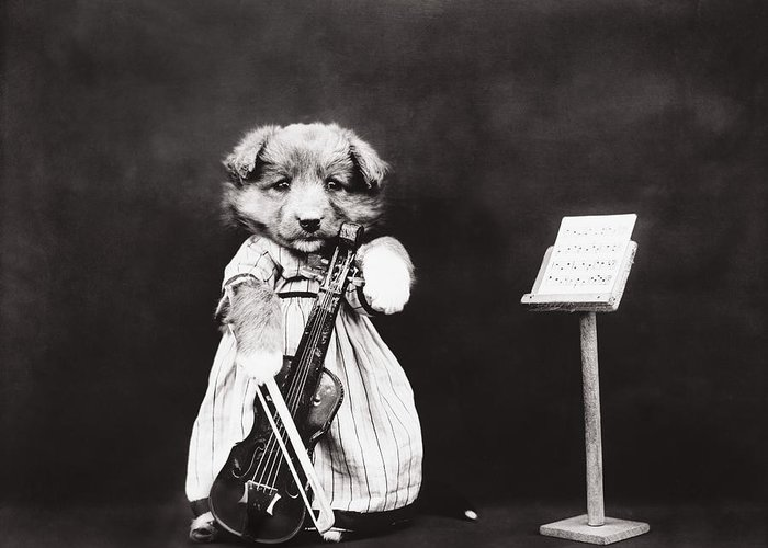 Dog Greeting Card featuring the photograph Little Fiddler by Aged Pixel