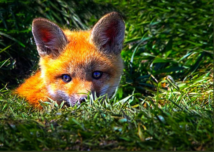 Fox Greeting Card featuring the photograph Little Red Fox by Bob Orsillo