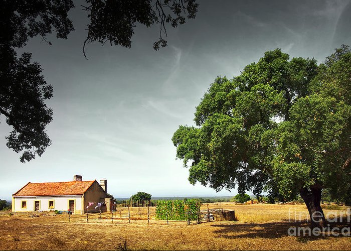 Agriculture Greeting Card featuring the photograph Little Rural House by Carlos Caetano