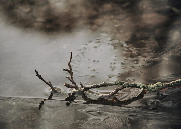 Twig Greeting Card featuring the photograph Little Thing by Odd Jeppesen