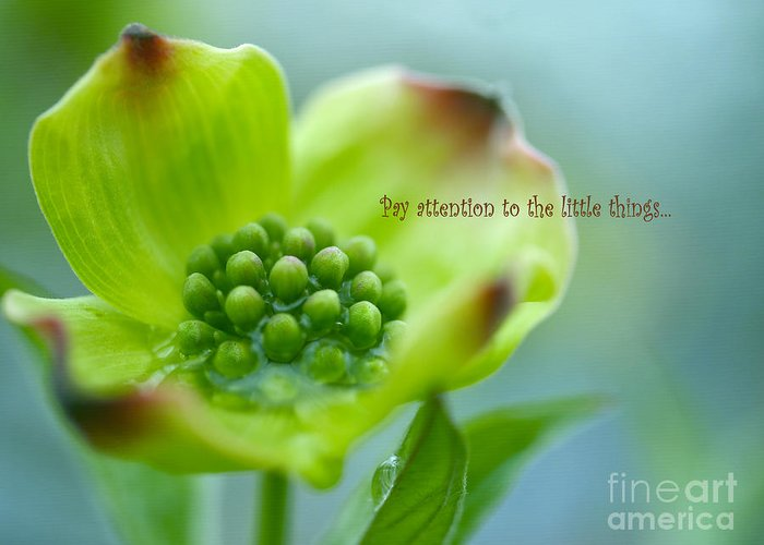 Fine Floral Photography Greeting Card featuring the photograph Little Things by Irina Wardas