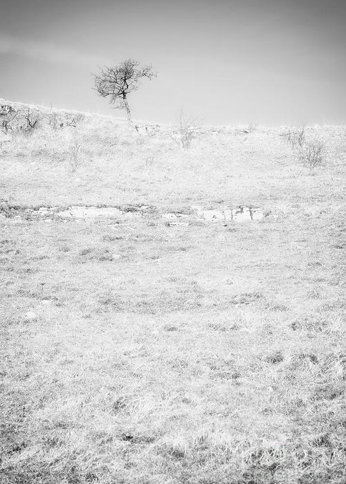 Tree Greeting Card featuring the photograph Little Tree On The Hill - Black And White by Natalie Kinnear
