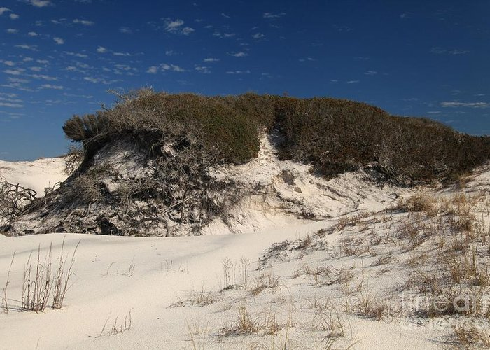 St Joseph Peninsula State Park Greeting Card featuring the photograph Lively Dunes by Adam Jewell