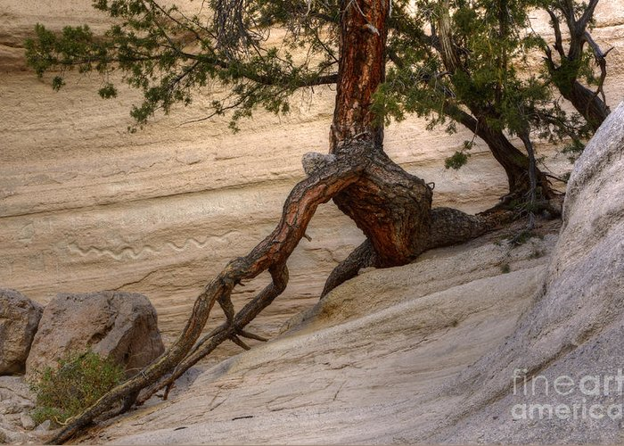 Snake Petroglyph. Tent Rocks Greeting Cards