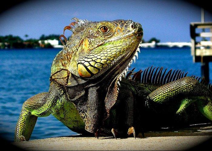 Lizard Print Greeting Card featuring the photograph Lizard Sunbathing In Miami by Monique Wegmueller