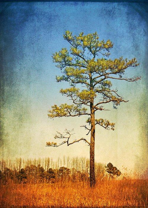 Loblolly Pine Along The Chesapeake Greeting Card featuring the photograph Loblolly Pine Along The Chesapeake by Carolyn Derstine