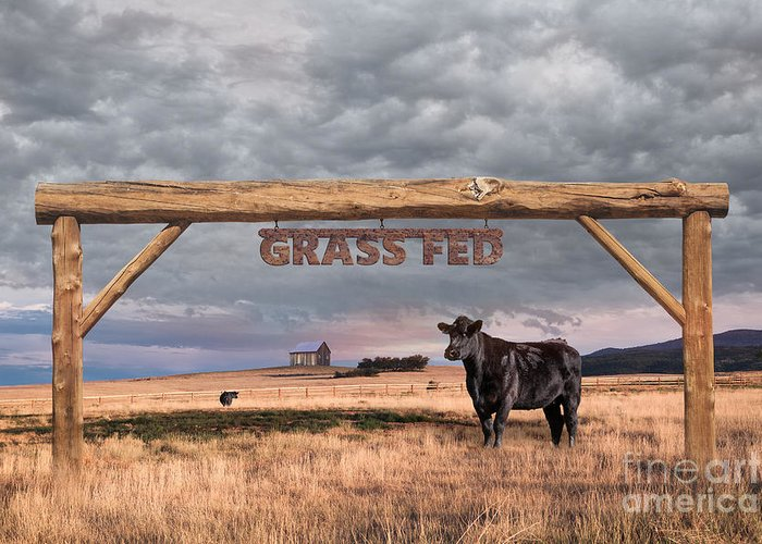 Ranch; Grass Fed; Farm; Field; Sky; Landscape; Cattle; Nature; Organic; Rural; Grass; Fence; Green; Entrance Greeting Card featuring the photograph Log Entrance To Grass Fed Angus Beef Ranch by Susan McKenzie