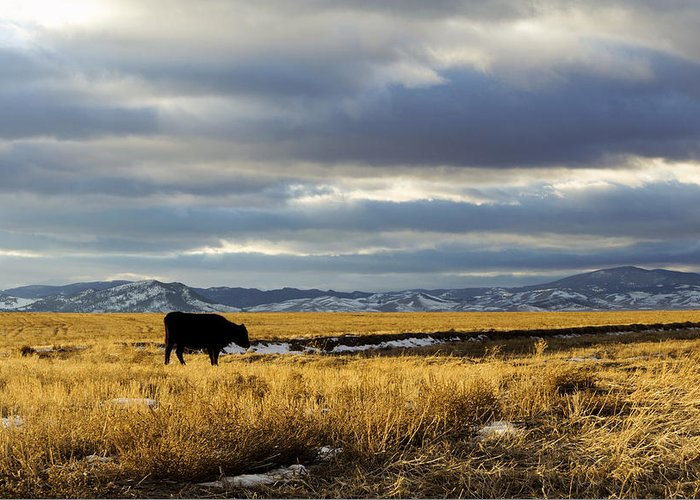Cows Greeting Card featuring the photograph Lone Cow Against A Stormy Montana Sky. by Dana Moyer