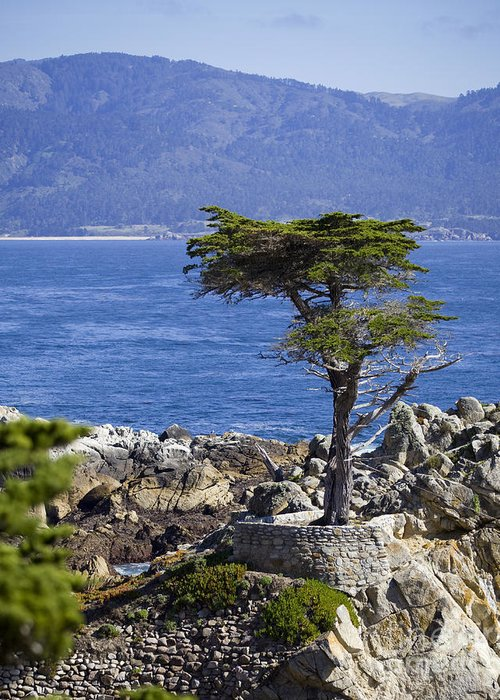 Lone Cypress Greeting Card featuring the photograph Lone Cypress Tree by B Christopher