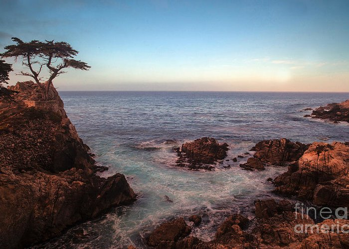 California Greeting Card featuring the photograph Lone Cyprus Pebble Beach by Mike Reid