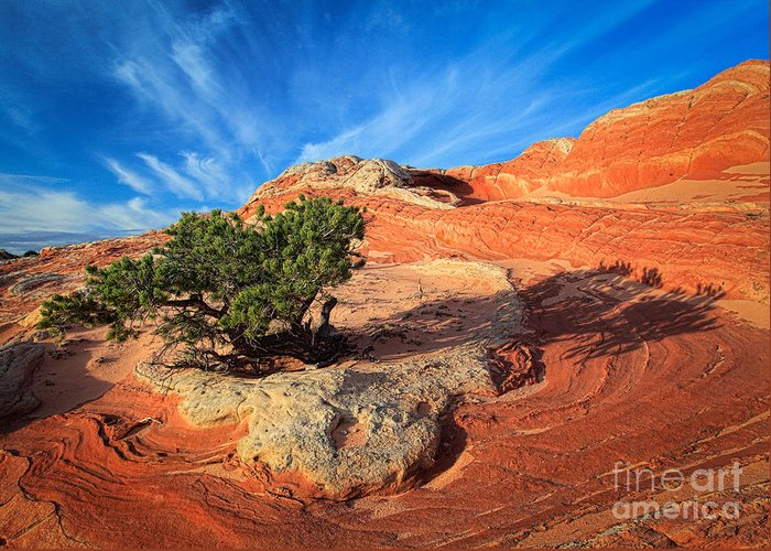 America Greeting Card featuring the photograph Lone Juniper by Inge Johnsson