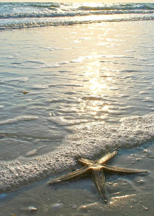 Starfish On Beach Greeting Card featuring the photograph Lone Star On Lovers Key Beach by Olivia Novak