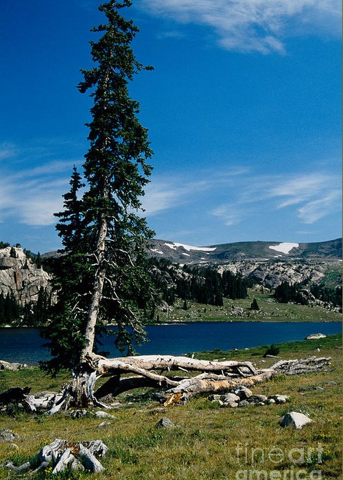 Mountains Greeting Card featuring the photograph Lone Tree At Pass by Kathy McClure