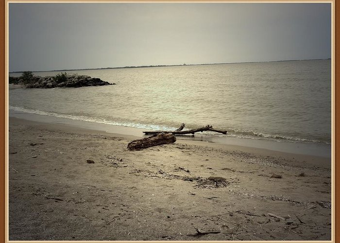 Sea Greeting Card featuring the photograph Lonely Seashore by Anandi Godse