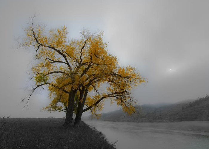 Montana Greeting Card featuring the photograph Loner by Kevin Spriggs
