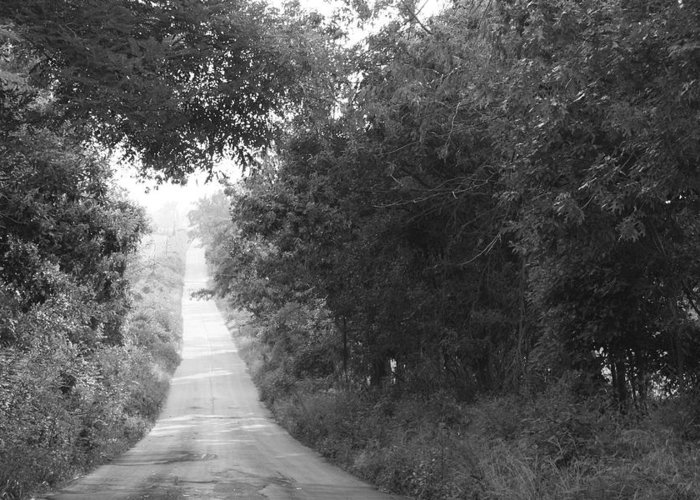 Country Road Fog Summer Day Quiet Evening Walk Greeting Card featuring the photograph Lonesome Road by Terry Scrivner