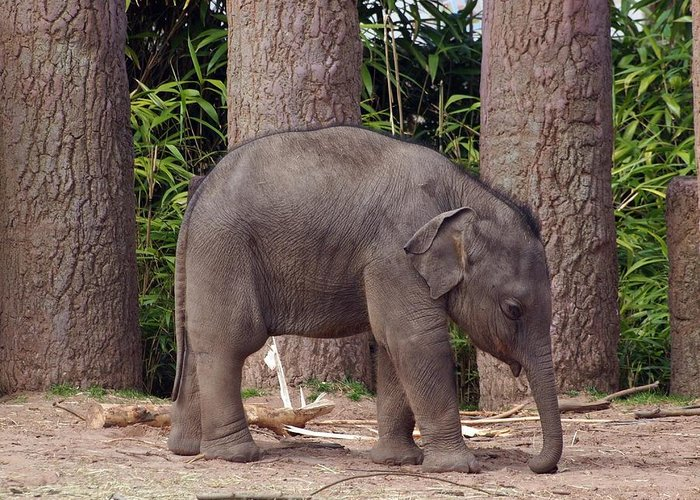 Elephant Greeting Card featuring the photograph Lonesome by Susan Tinsley
