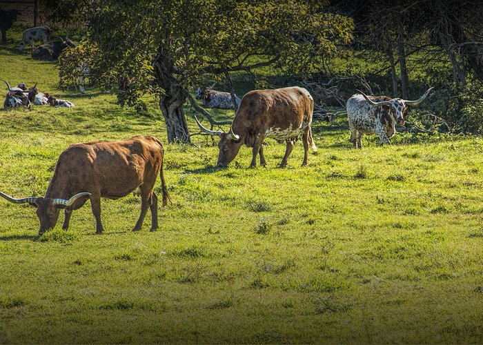 Art Greeting Card featuring the photograph Longhorn Steer Herd In A Pasture by Randall Nyhof