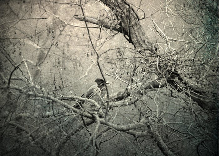 Branches Greeting Card featuring the photograph Lontano by Taylan Apukovska