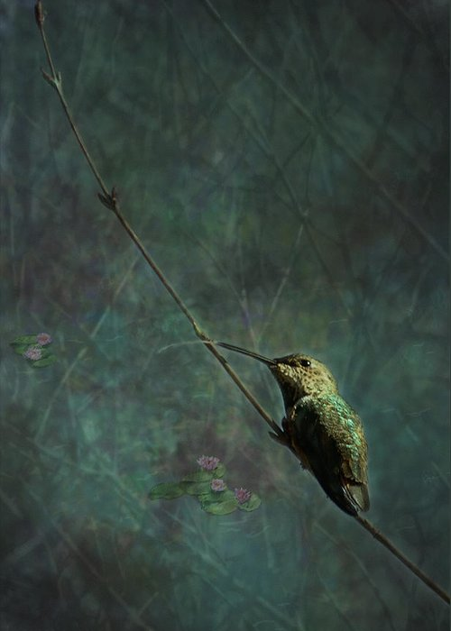 Hummingbird Greeting Card featuring the photograph Looking For Monet 1 by Belinda Greb