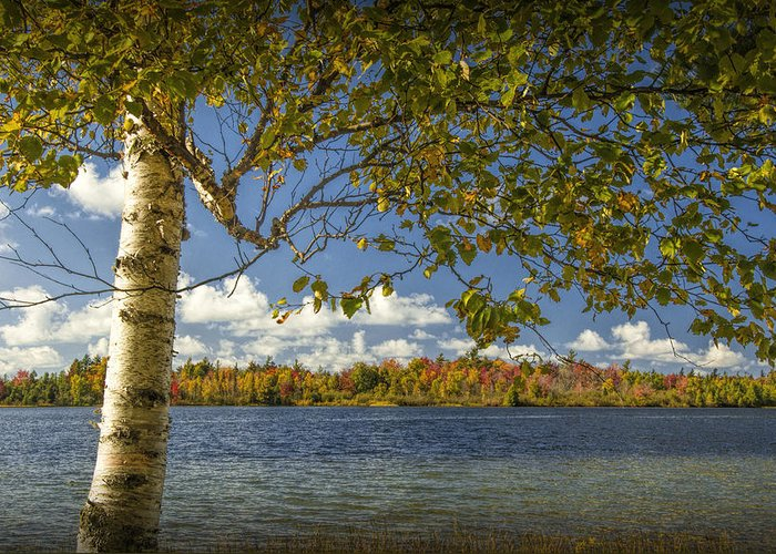 Art Greeting Card featuring the photograph Loon Lake In Autumn With White Birch Tree by Randall Nyhof