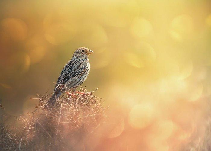 Birds Nest Stationery