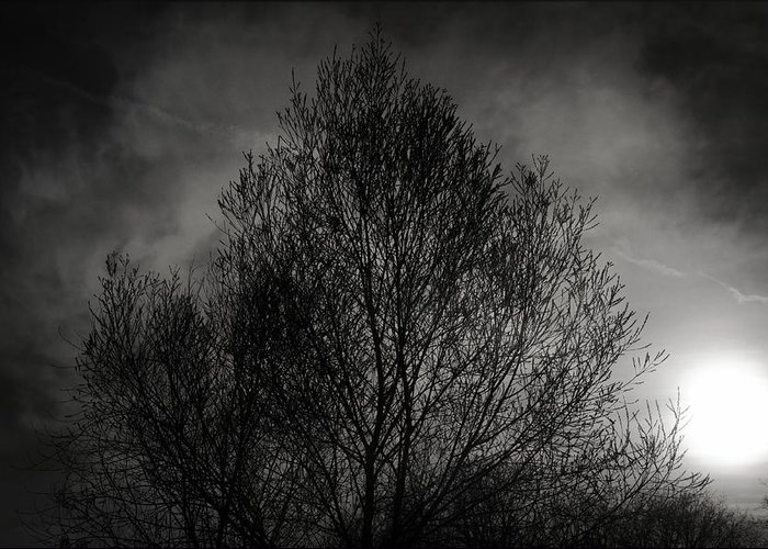 Trees Greeting Card featuring the photograph Lost In Moments by Taylan Apukovska
