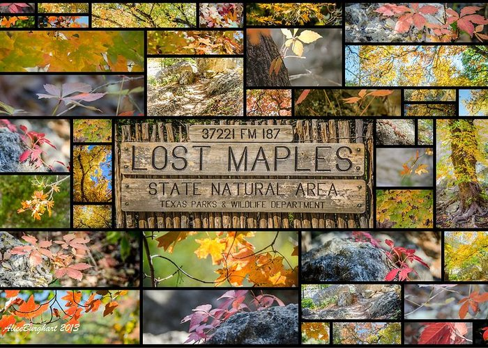 Texas Greeting Card featuring the photograph Lost Maples Collage by Alice Burghart