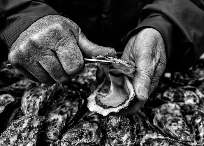 Hands Greeting Card featuring the photograph L'ostreiculteur  Oyster Farmer by Manu Allicot
