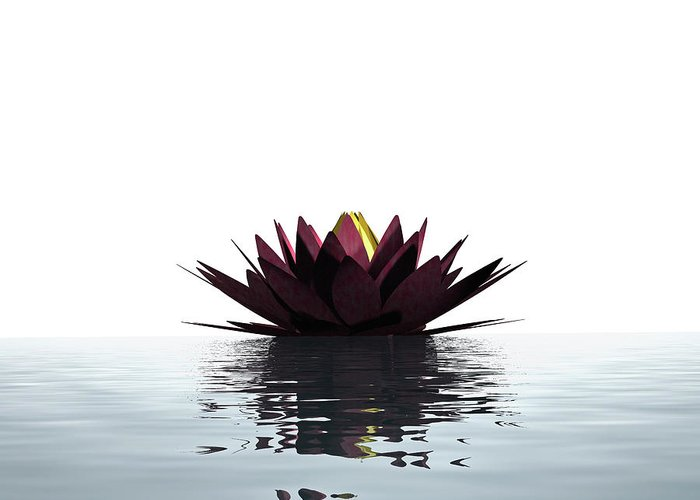 White Background Greeting Card featuring the photograph Lotus Flower Floating On The Water by Artpartner-images