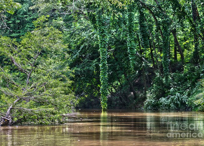 Cypress Greeting Card featuring the photograph Louisiana Bayou Toro Creek Swamp by D Wallace