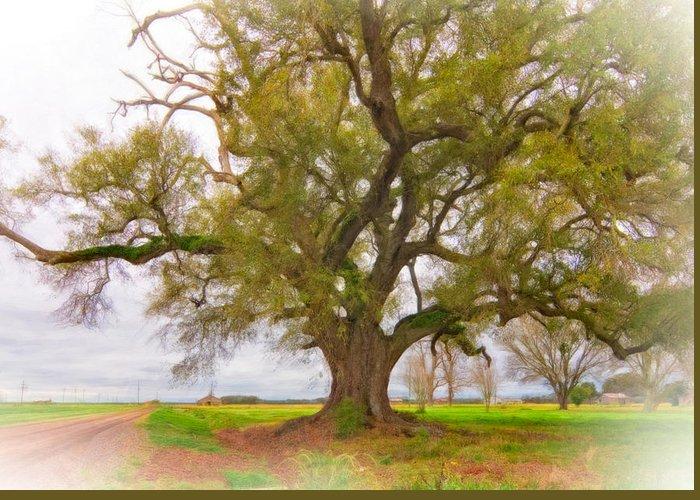 Delta Greeting Card featuring the photograph Louisiana Dreamin' by Steve Harrington