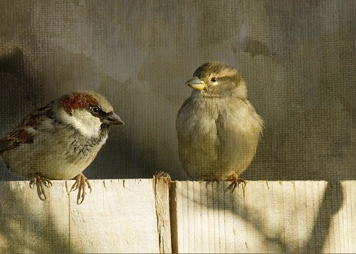 Sparrows Greeting Card featuring the photograph Love Birds by Rebecca Cozart