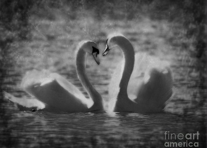 Festblues Greeting Card featuring the photograph Love Is.. by Nina Stavlund