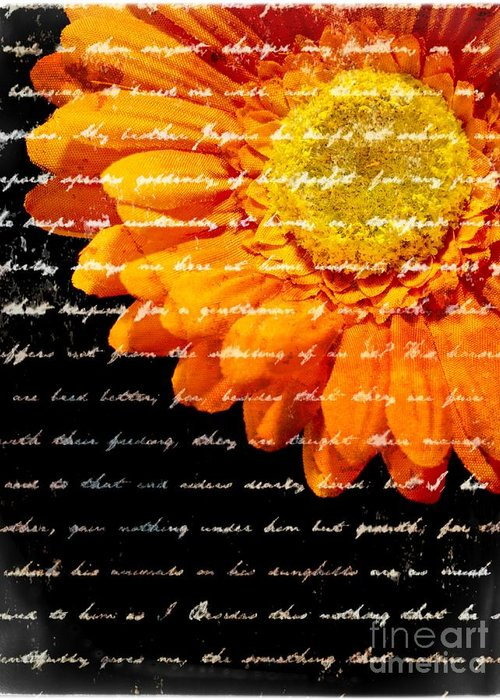 Flower Greeting Card featuring the photograph Love Letters by Edward Fielding