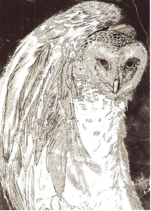Wildlife Black And White Greeting Card featuring the drawing Love Owl by George Harrison