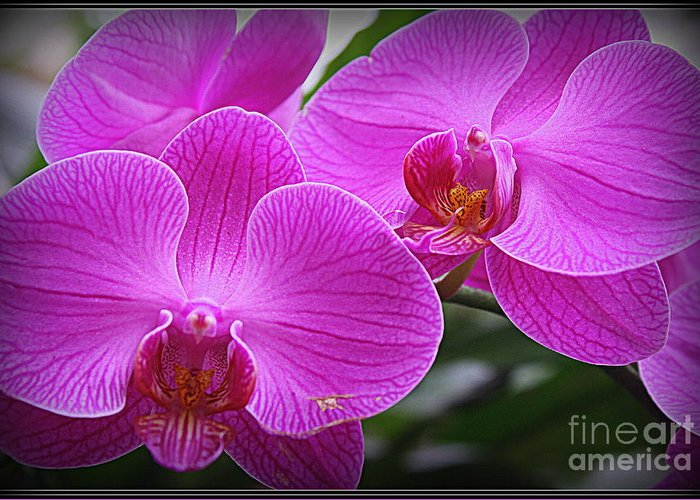 Orchid Greeting Card featuring the photograph Lovely In Purple - Orchids by Dora Sofia Caputo Photographic Design and Fine Art