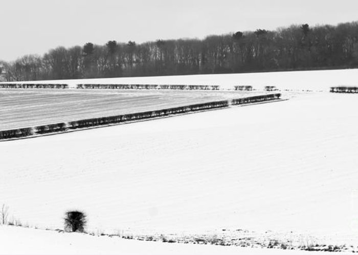 Winter Scene Greeting Card featuring the photograph Low Tree Plantation by David Hollingworth