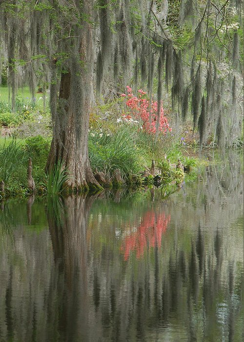 Lowcountry Greeting Card featuring the photograph Lowcountry Series I by Suzanne Gaff