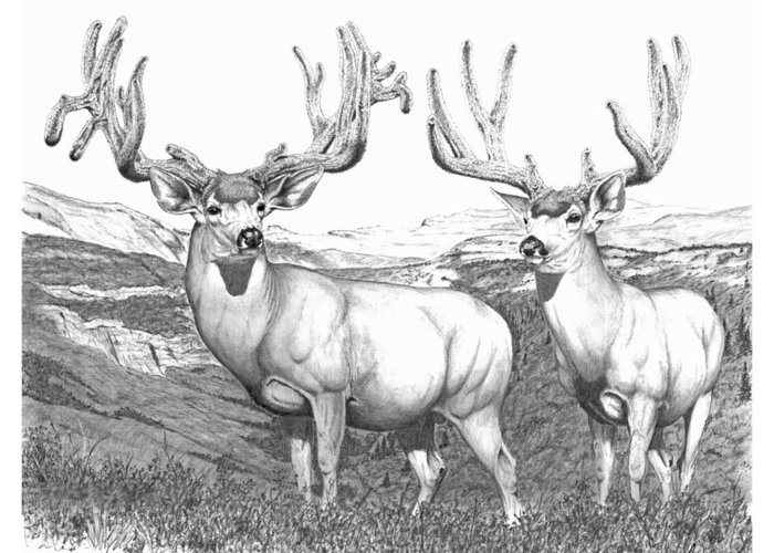 Muledeer Buck Greeting Card featuring the drawing Lowe Buck by Darcy Tate