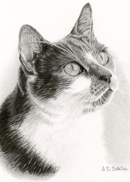 Domestic Pet Portraits.house Cat Greeting Cards