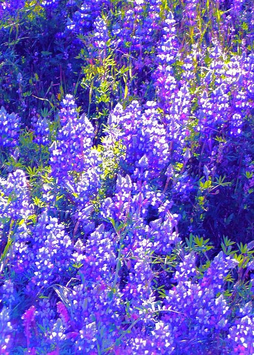 Flowers Greeting Card featuring the photograph Lupine 2 by Pamela Cooper