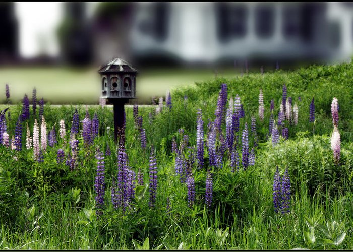 Birdhouse Greeting Card featuring the photograph Lupine And Houses by Wayne King