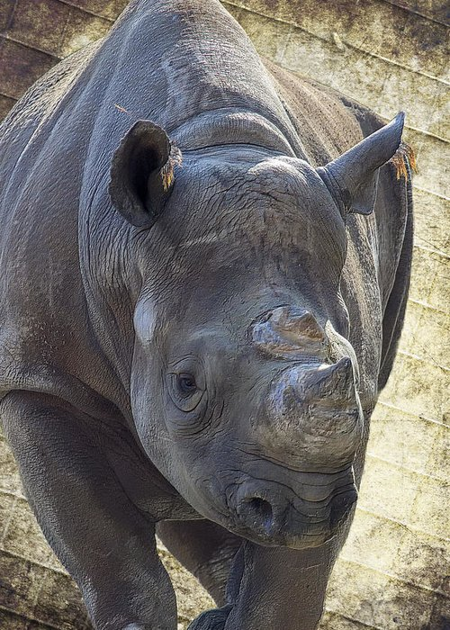 Black Rhinoceros Greeting Card featuring the photograph Lurching Rhino by Bill Tiepelman